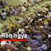 TNI melarang bantu Rohingya, Nelayan Aceh nekat !
