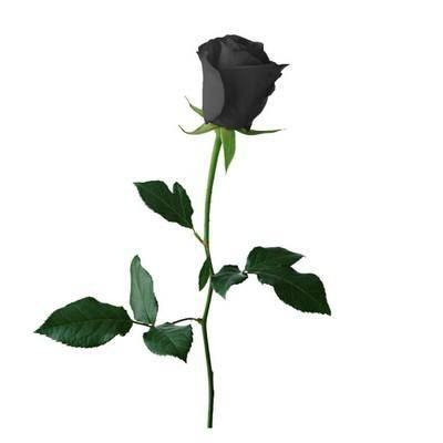 black-rose-of-love-wallpaper