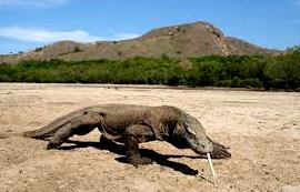 Mengenal Ciri-Ciri Reptil