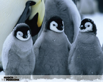 Cute Penguin Wallpapers