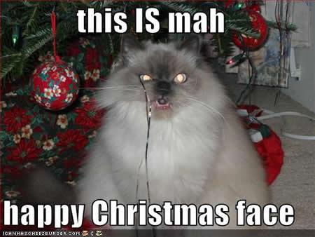 Christmas Cat Pictures Cat Pictures and Videos