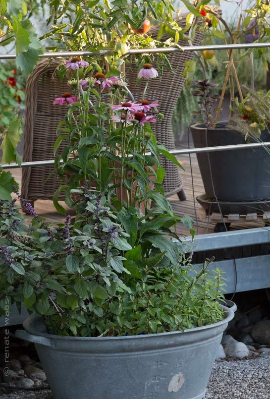 Gartenblog geniesser garten gartenbilder september - Geniesser garten ...