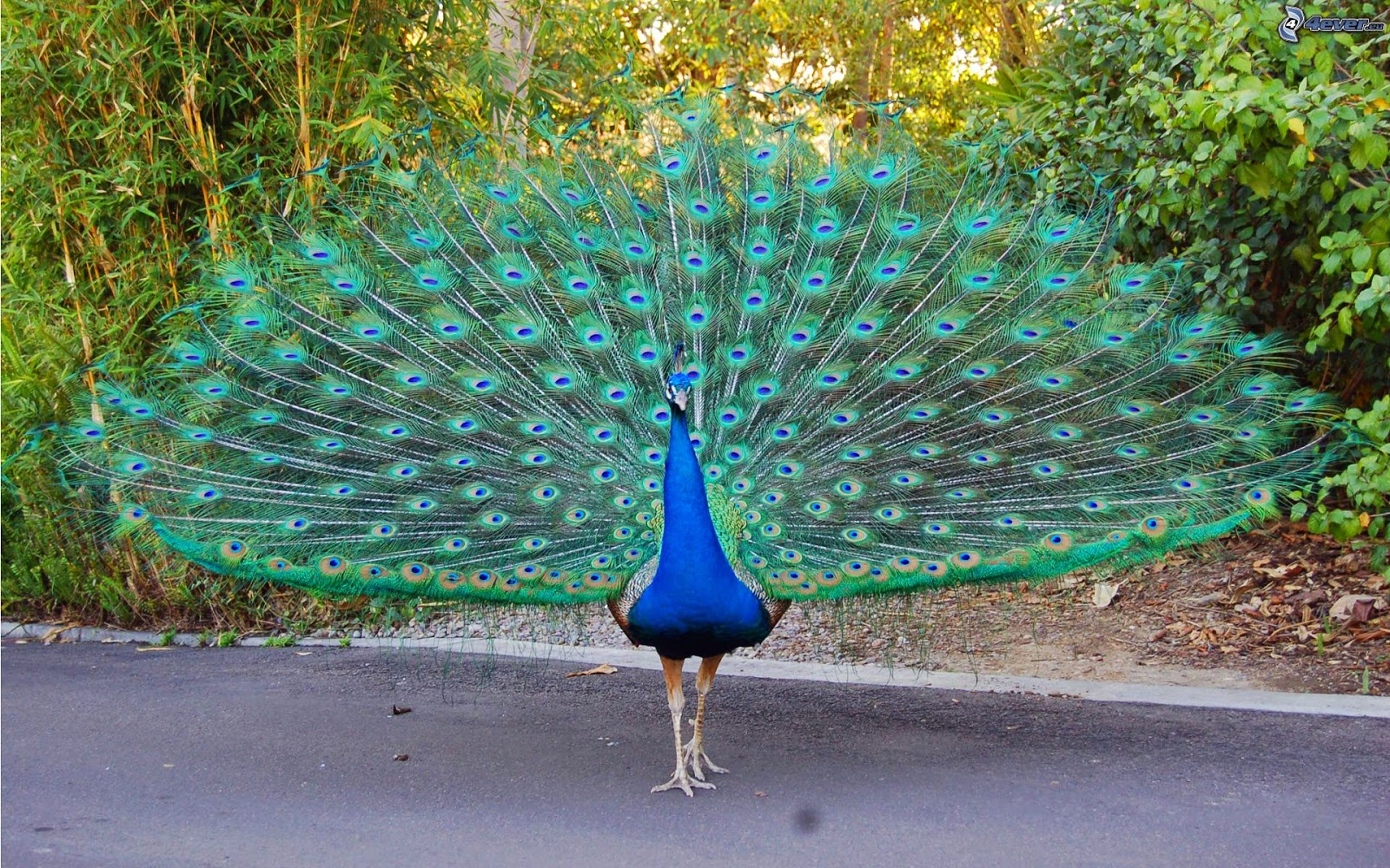¿Porque colores llamativos de algunos animales?