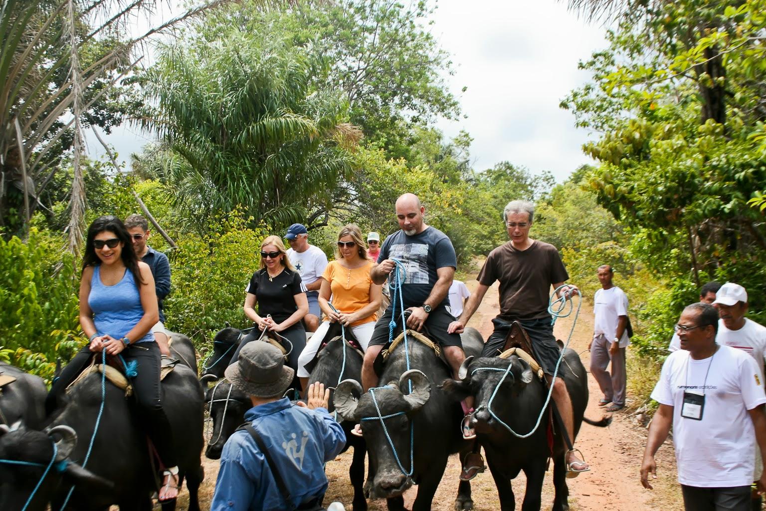 Comitiva não se intimidou diante do desafio de passear em  búfalos e se encantou com a força desses animais oriundos da África Foto: Benigna Soares - Paratur