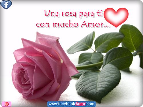 linda flor de rosa para el amor