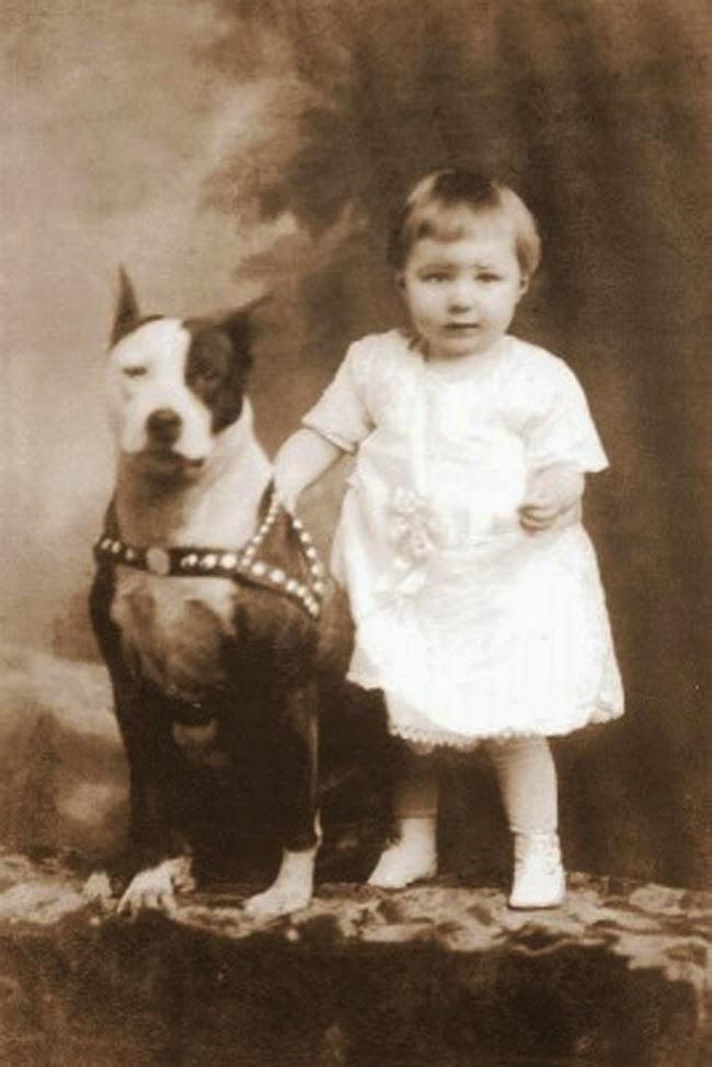 [Image: pit-bull-nanny-dog-18.jpg]