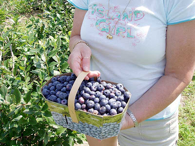 Now that's a beautiful basket of blueberries!