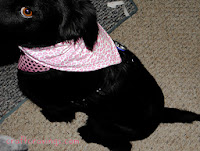 http://craftcravings.com/2013/11/slip-collar-reversible-dog-bandana-tutorial.html