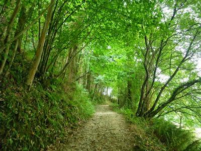 El Camín Encantáu, una de las rutas más bellas de Asturias