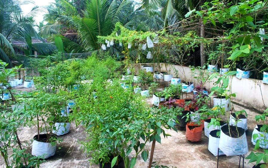 Ms Kavithas Rooftop Vegetable Garden