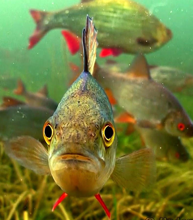 стайка рыб