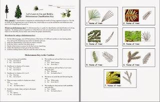 17 Best images about Classification