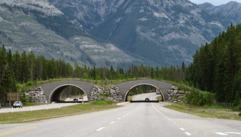 Wildlife Overpasses Around The World: Working With Nature, Not Against