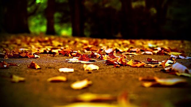 Kisah Teladan Nenek Pemungut daun.