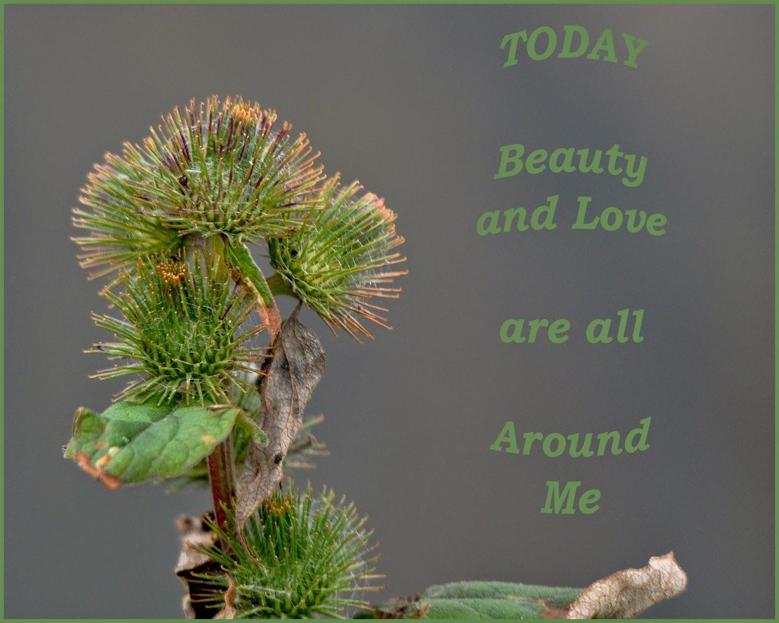 affirmation card on beauty and love
