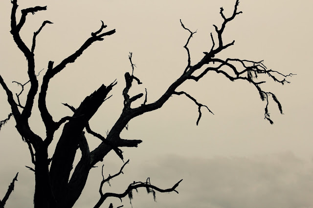 Spooky Halloween Tree (filter applied)-Brazos Bend State Park, Needville, Texas