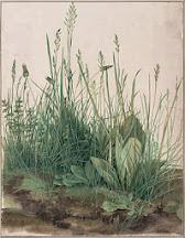 La grande touffe d'herbes - Albrecht Dürer