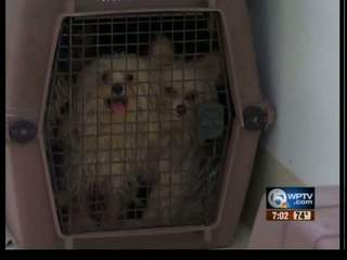 Tri-County Humane Society rescues dozens of dogs from puppy mills