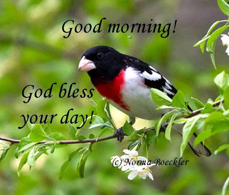 Love Birds Good Morning Wallpaper : Good Morning Images With Love Birds - impremedia.net