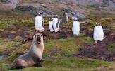 Hábitat natural de los pinguinos (8 fotos lindas)