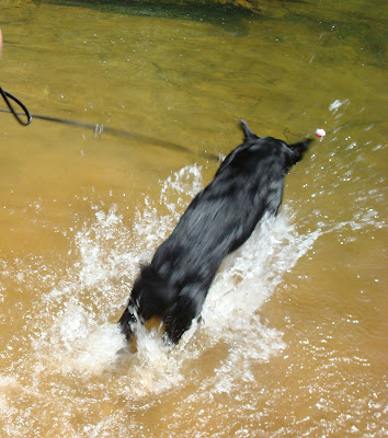 Picture of Rudy jumping into the water