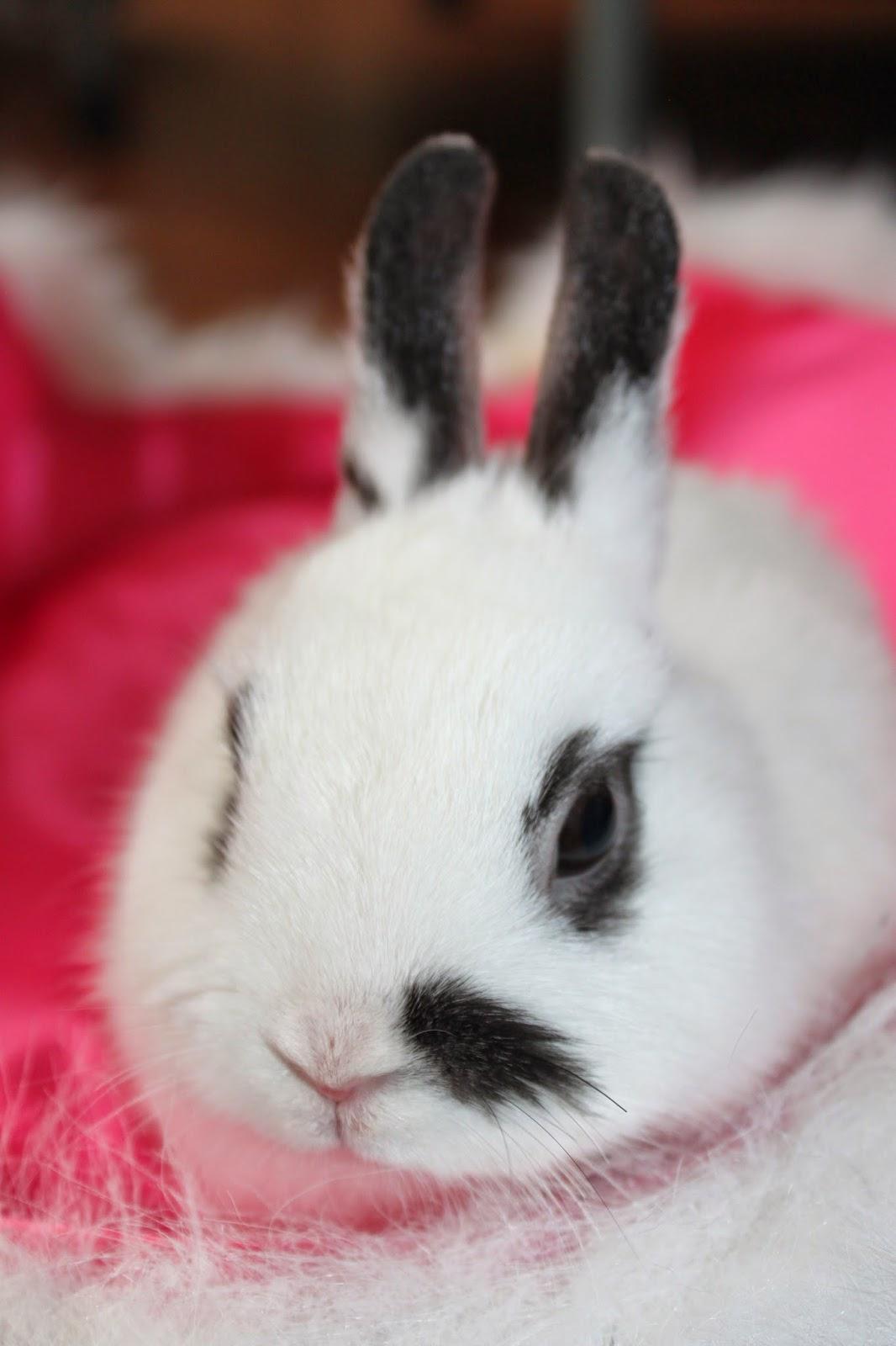 baby bunny very cute