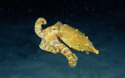 Sea World Animal Beauty Wallpapers