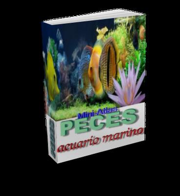 Kultura pdf y m s mini atlas de peces de acuario marino for Peces de acuario marino