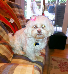 Beautiful Prissy is one of our most favorite doggies
