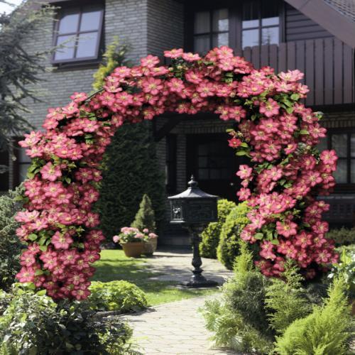 il giardino del brocante le piante sulla mia terrazza. Black Bedroom Furniture Sets. Home Design Ideas
