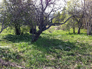 Den gamla trädgården