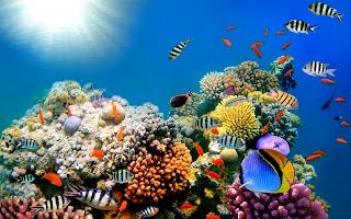 Download Underwater Ocean Background