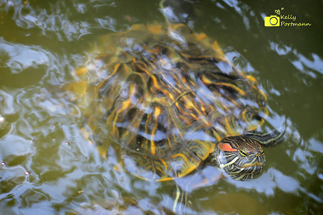 Watch the turtle. He only moves forward when he sticks his neck out.