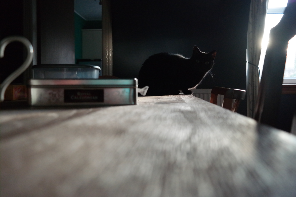 Backlit black cat (Polly) on the dining table