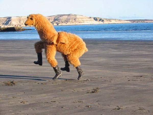 llama alpaca suit