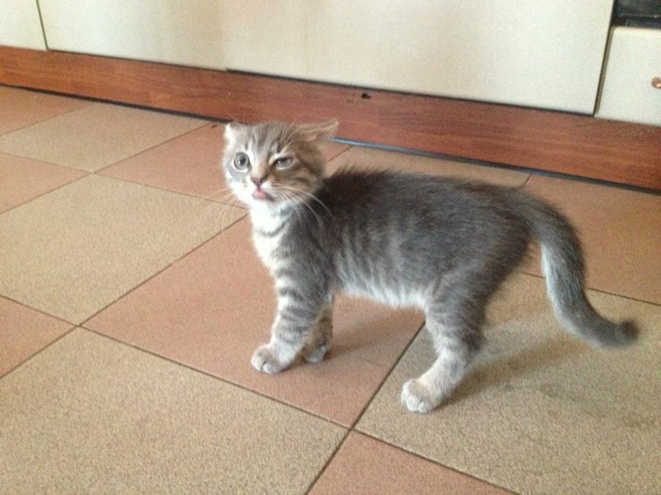Сумасшедшие коты, фото 8