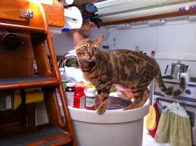 live aboard cat