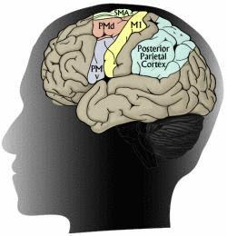 それでは、最後になりますが、Psychopath 精神病質者と呼ばれて... Musical P