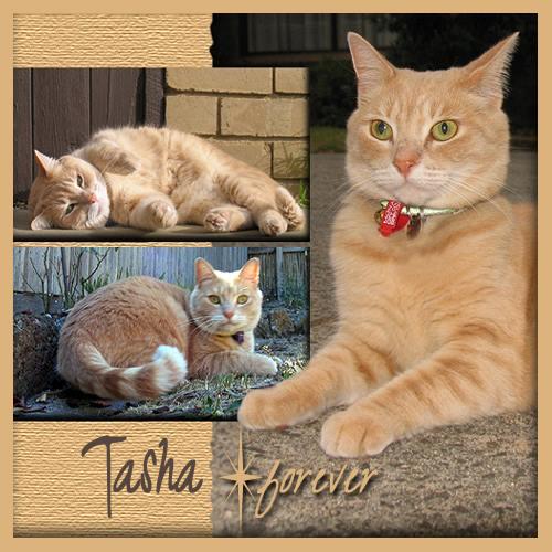 RIP TASHA