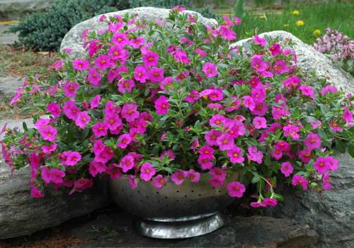 Ландшафтный дизайн для лентяев цветы