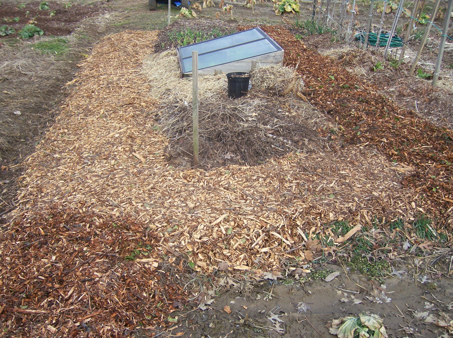 from seed to scrumptious gardening with wood chips