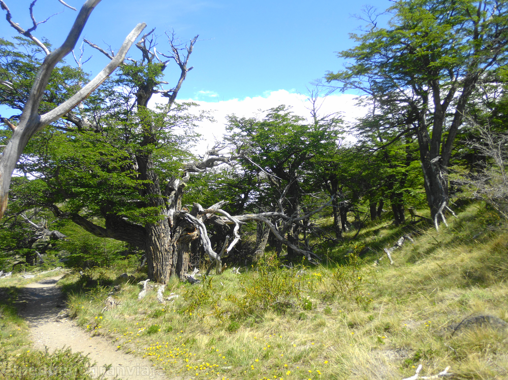 Trekking Laguna Torre, El Chaltén