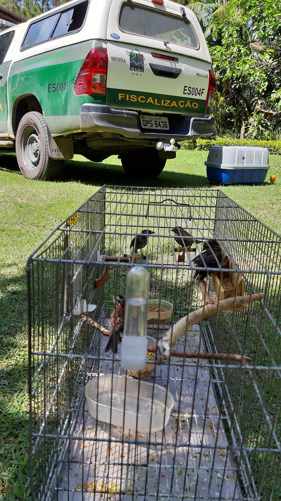 Dia de soltura de Pássaros na Reserva Natural Reluz