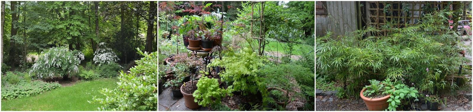 Bricuisir quelques photos de notre jardin sauvage for Jardin sauvage