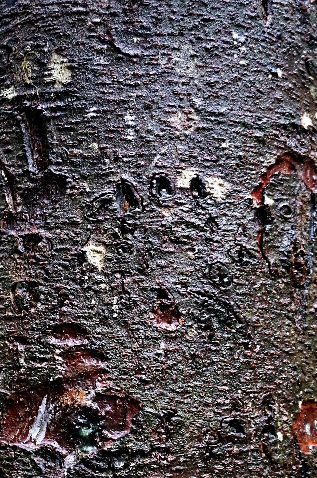 ketchikan bear claw in tree alaskan cruise review