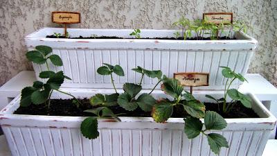 Horta com tabuletas