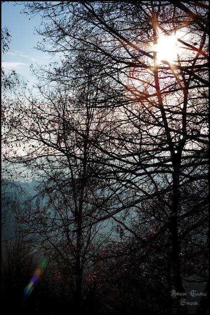 Aufnahmen von Herbstwald 2011