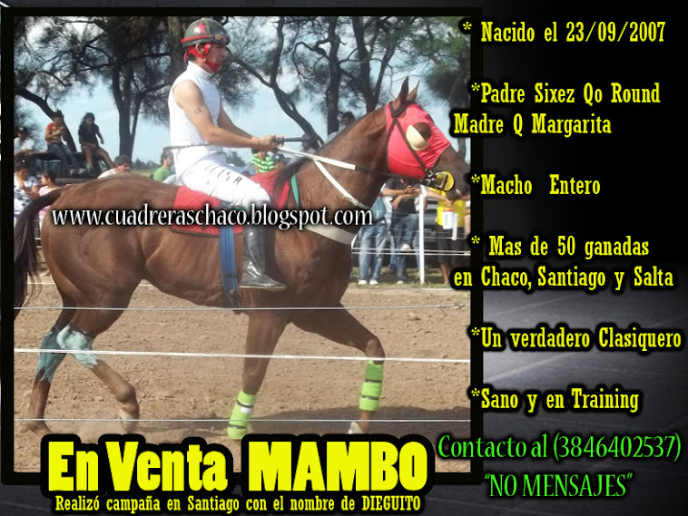 MAMBO EN VENTA