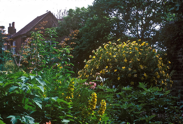Garden at Lamb House, Rye, England  2003