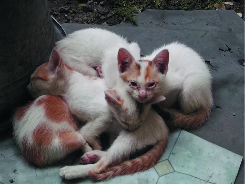 foto foto anak kucing lucu di luar jendela kamar gue